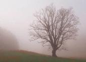 Pruning Dead Wood